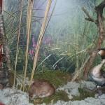 представники фауни Холминський музей